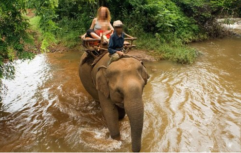 Voi đực giẫm chết chủ rồi chạy theo voi cái