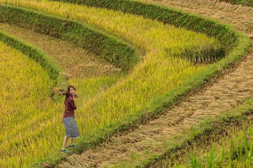 Tuy vậy, Mù Cang Chải vẫn không ngăn được niềm yêu thích của các du khách ghé thăm và tranh thủ tạo dáng bên những thửa ruộng vừa gặt xong.
