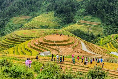 Phần lớn ruộng mâm xôi đã được gặt nhưng vẫn thu hút không ít du khách tới thăm và chụp ảnh. Ảnh: Tuấn Trần.