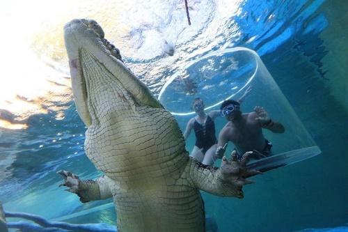 Lồng tử thần là một địa điểm du lịch nổi tiếng thuộc Crocosaurus Cove, một trung tâm thủy sinh và động vật hoang dã ở Darwin, Australia. Tại đây, du khách sẽ được đối mặt với những con cá sấu nước mặn khổng lồ.
