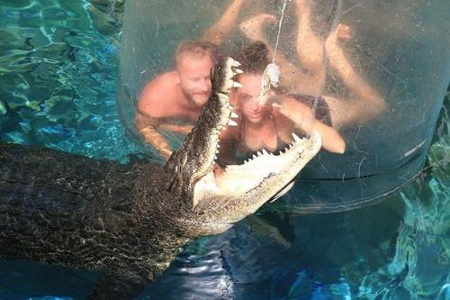 Lồng tử thần được làm từ acrylic, một loại nhựa tổng hợp, nhẹ và có khả năng chịu lực gấp 17 lần so với kính thông thường. Vì vậy nó có thể đảm bảo an toàn cho du khách ở bên trong khi họ đang quan sát những con cá sấu dài khoảng 5m bơi xung quanh.