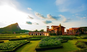 Vườn nho trông như ngoại ô châu Âu ở Pattaya