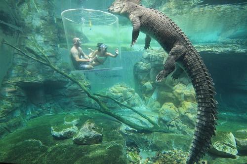 Đại diện của Crocosaurus Cove cho biết Lồng tử thần tuyệt đối an toàn, miễn là du khách đáp ứng được yêu cầu về độ tuổi và trải qua khóa huấn luyện ngắn về các kĩ năng an toàn trước khi vào bên trong lồng.