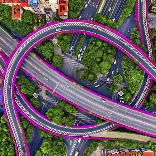 Hoa giấy nở rộ trên cầu vượt ở Quảng Châu