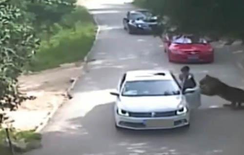 Nạn nhân vụ hổ vồ ở Trung Quốc đòi bồi thường 400.000 USD