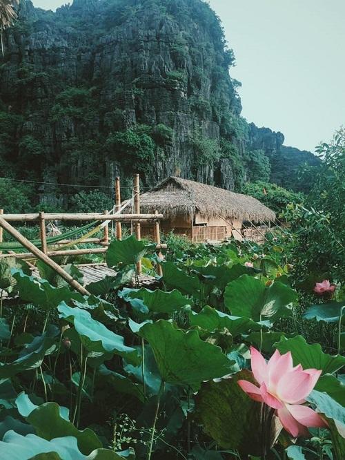 Homestay nằm giữa hồ sen ở Ninh Bình