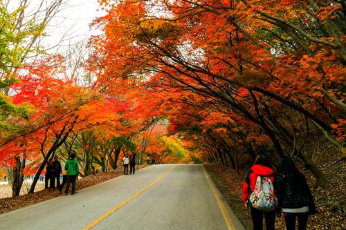 Mùa thu là một trong những thời điểm đẹp nhất năm để du lịch Hàn Quốc. Ảnh: Alfianabdi.wordpress.com