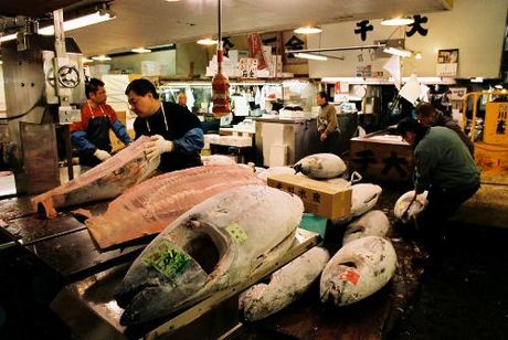 Một góc chợ cá Tsukiji. Ảnh: Flickr.