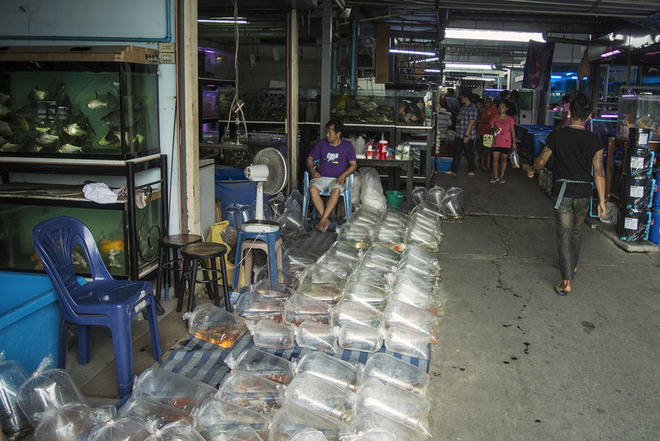Bên trong chợ cá triệu đô tại Bangkok