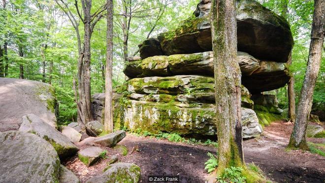 Khu rừng bí ẩn nằm trong lòng nước Mỹ