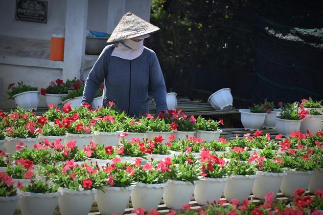Du khách đi xe điện tham quan làng hoa lớn nhất miền Tây