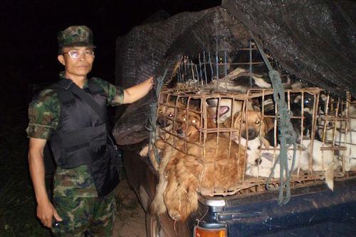 Chính quyền Thái Lan đã bắt giữ nhiều vụ buôn lậu chó sang các quốc gia châu Á khác. Ảnh: Soi Dog Foundation.