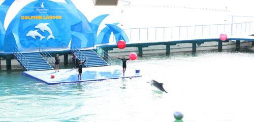 Đèn lồng Cá heo chính thức được trưng bày cho du khách thưởng lãm cũng đánh dấu sự trở lại của sân khấu biểu diễn cá heo với quy mô lớn nhất từ trước đến nay tại Vinpearl Land Nha Trang