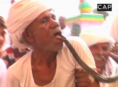Ông Rakha cảm thấy sung sướng mỗi khi bị rắn cắn. Ảnh: CAP.