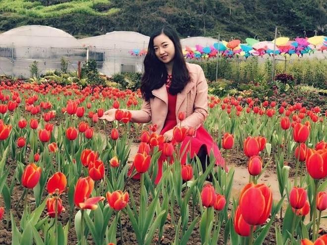 Vườn hoa tulip đẹp như châu Âu ở Lào Cai