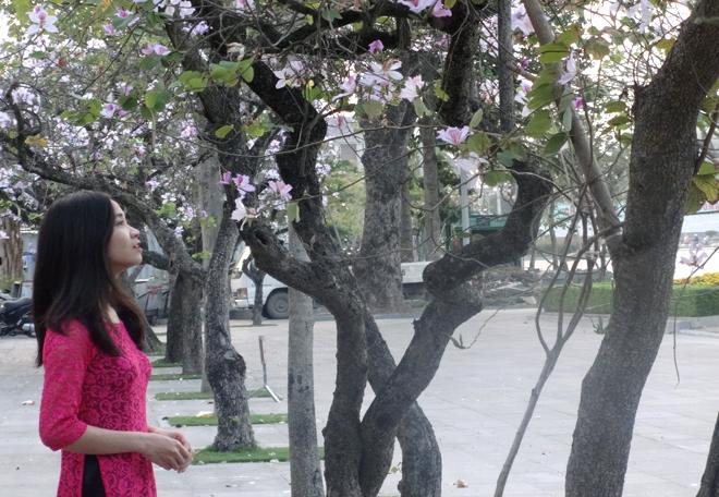 Mỗi dịp hoa nở, người dân lại thích thú đi chụp hình với loài hoa Tây Bắc.