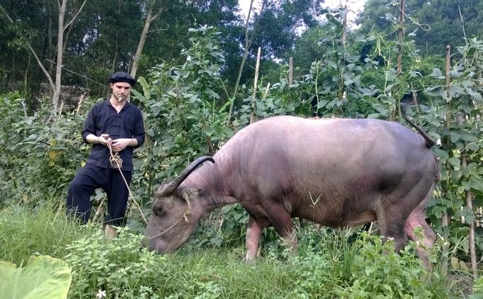 Khách Tây chăn trâu, bắt cá ở làng quê Thái Nguyên