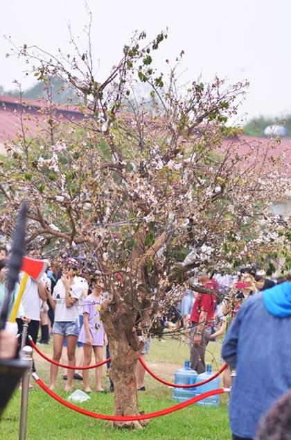 3 lễ hội hoa khiến du khách thất vọng dù chen chúc vào cổng - 2