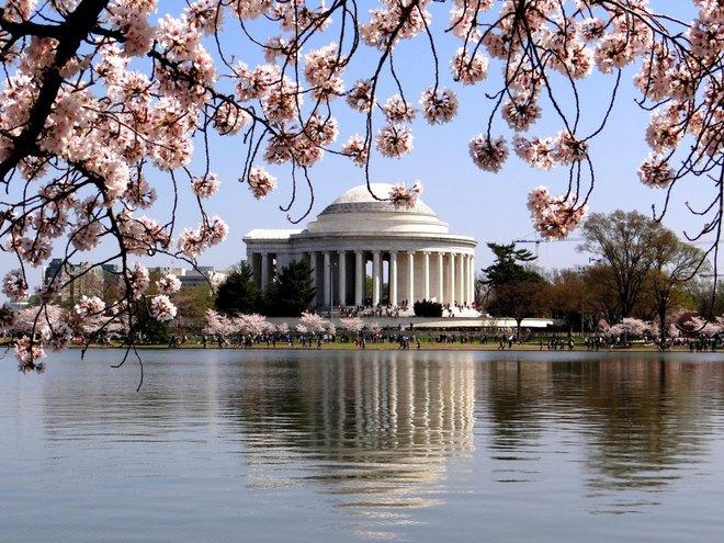 Lễ hội hoa anh đào toàn quốc ở Washington DC là một trong những điểm đến nổi tiếng nhất thế giới mà du khách có thể chiêm ngưỡng mùa hoa này.   Năm nay lễ hội kỷ niệm lần thứ 90 tổ chức, từ ngày 15/3 đến 16/4. Sự kiện nhằm thể hiện tình hữu nghị giữa hai nước Nhật Bản và Mỹ, món quà là 3.000 cây hoa anh đào của Nhật Bản tặng năm 1912.