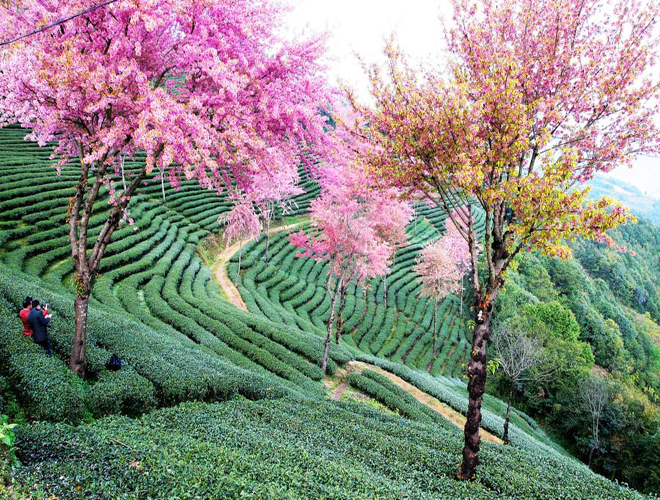 10 điểm tới ngắm trăm hoa khoe sắc ở Trung Quốc