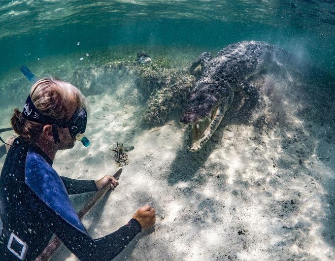Khoảnh khắc rợn người khi du khách chơi đùa trước miệng cá sấu