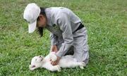 Sư tử lần đầu đẻ con ở Safari Phú Quốc