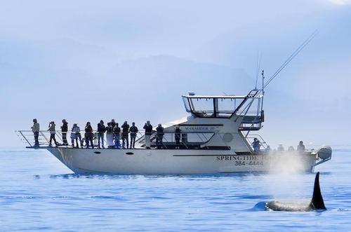 Đặc sản cá voi khiến du khách lạnh gáy ở Caribbean - Ảnh minh hoạ 7