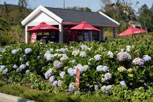 Tận hưởng mùa hè cùng muôn hoa rực rỡ trên nóc nhà Đông Dương