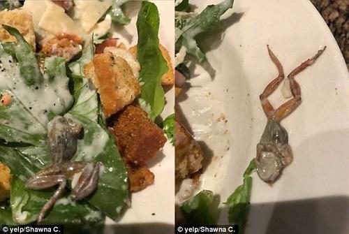 thuc-khach-non-thoc-thao-vi-phat-hien-ech-chet-trong-salad