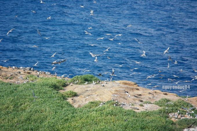 Mùa chim làm tổ trên hòn đảo hình chiếc hài ở Bình Thuận