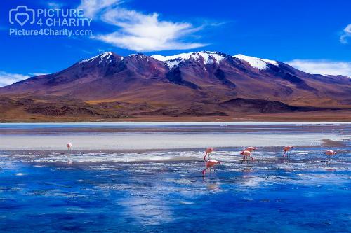 Bức tranh Đàn hồng hạc buổi sáng ở hồ Laguna, Bolivia của Đinh Hằng được ca sĩ Hiền Thục chọn mua.