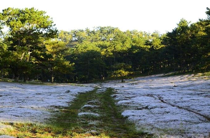 Bốn đồi cỏ cho người mê cắm trại từ bắc vào nam