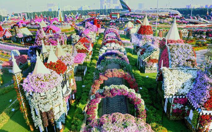 Vườn hoa Dubai Miracle có hơn 45 triệu bông phủ trên diện tích hơn 7 ha là vườn hoa lớn nhất thế giới. Không gian khu vườn luôn rực rỡ nhờ những bông hoa nhiều màu sắc. Nhưng điều khiến du khách kinh ngạc nhất là nó nằm giữa lòng sa mạc. Ảnh: Dubai Miracle Garden.