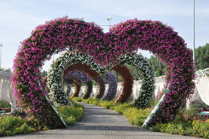 Lối vào Dubai Miracle gồm nhiều cổng vòm hình trái tim phủ đầy hoa như mời gọi du khách tới tham quan. Du khách sẽ thấy như đang thưởng ngoạn một triển lãm nghệ thuật đầy hấp dẫn khi khám phá những khu trưng bày hoa đẹp mắt tại đây. Những thiết kế này đều được thay đổi theo mùa. Ảnh: IdeaChannels. Ảnh: Minh An.