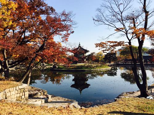 Mùa thu Hàn Quốc đẹp quyến rũ khách thập phương.