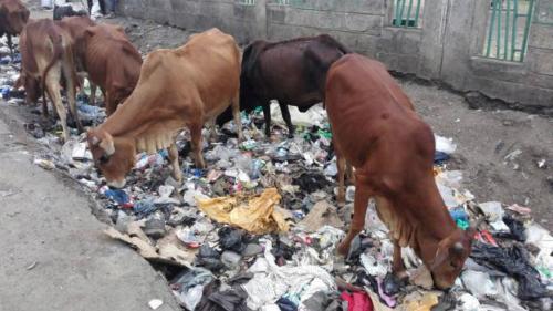 Kenya cấm dùng túi nylon, ai vi phạm ngồi tù 4 năm - ảnh 1