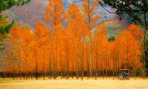 Chiêm ngưỡng vẻ lãng mạn mùa thu Hàn Quốc