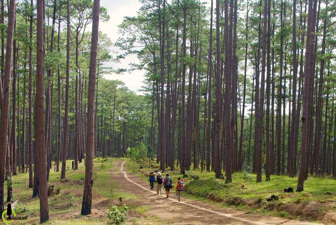 Xuyên rừng chinh phục nóc nhà cao nguyên Lâm Viên