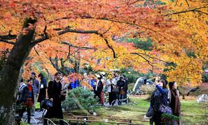 Lịch đón mùa lá đỏ ở Nhật Bản năm 2017