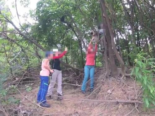 WAP đã quay lại được cảnh một hướng dẫn viên du lịch trèo lên cây để bắt một con lười xuống cho du khách chụp ảnh.