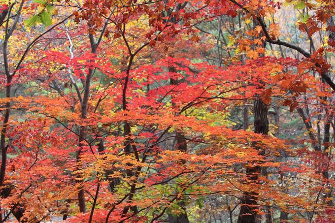 Mùa lá đỏ ở các vườn quốc gia Hàn Quốc năm 2017