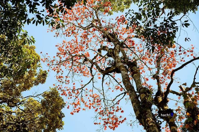 5 điểm ngắm lá phong đỏ ngay ở Việt Nam