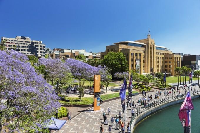 Mùa phượng tím rực rỡ ở Sydney