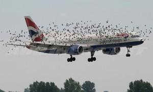 Điều gì sẽ xảy ra khi chim bay vào động cơ máy bay?