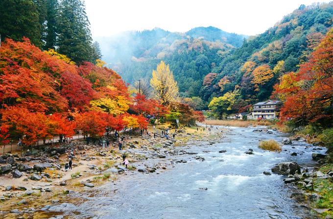 Mùa thu ở điểm ngắm lá vàng đẹp bậc nhất Nhật Bản