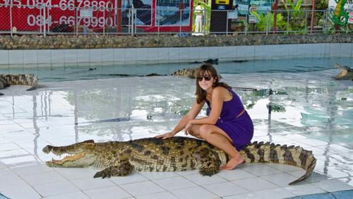 Nhiều du khách cũng rất thích thú với việc chụp ảnh, tạo dáng cùng cá sấu khi đến Thái Lan. Ảnh: Mychiangmaitour.