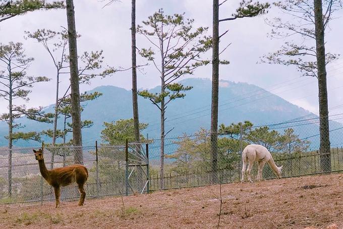 Vườn thú muốn tham quan phải canh giờ ở Lâm Đồng