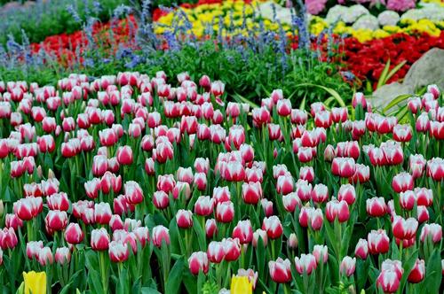 Những vườn hoa rực rỡ tại Đồi Vạn hoa đang trong Lễ hội Hoa mùa xuân sẽ là địa điểm check-in phong cách, lãng mạn. Cùng nhau chụp những bức ảnh du lịch giữa khung cảnh Âu, Á, Phi& sẽ ghi lại những khoảnh khắc ngọt ngào nhất của chuyến đi.