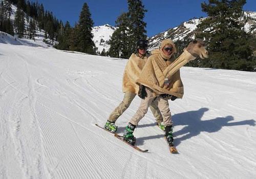 Hai du khách đang trượt tuyết trong trang phục lạc đà.