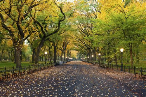 New York - Quả táo lớn của nước Mỹ phồn hoa  Có thể nói New York, thành phố của những chiếc taxi màu vàng chưa bao giờ vắng mặt trong danh sách những thành phố phải đến. Đây cũng là thành phố gắn liền với thời sinh viên của Thiên Minh, do đó mỗi khi muốn đi trốn chàng nhiếp ảnh gia lại tìm về. Khác với ấn tượng một New York náo nhiệt và hối hả, Quả táo lớn của nước Mỹ với Thiên Minh lại lãng đãng và bình yên. Thiên Minh chia sẻ: Chỉ có ở nơi này, mình mới là một gã trầm tư thực thụ, một mình giữa bao khuôn mặt xa lạ, dạo loanh quanh trên những con đường chỉ để lắng nghe tiếng lá lạo xạo dưới đế giày. Theo Thiên Minh, khoảnh khắc đẹp nhất ở New York là vào giai đoạn chuyển giao giữa mùa thu và mùa đông. Vào mùa này, công viên trung tâm thành phố Central Park cũng là một điểm tham quan thú vị với đầy sắc đỏ vàng rực rỡ của lá cây vào độ chuyển màu.